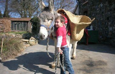 Ânes-OK-Promenades âne-cheval-attelage bis Provinz Lüttich
