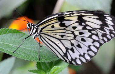 La Grange aux Papillons-Parcs et jardins bis Province de Hainaut