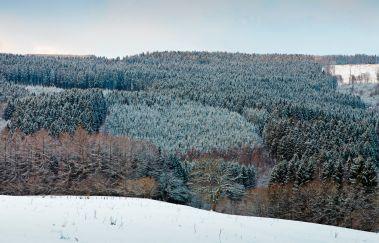 Pistes de ski de Fond de Herzebösch-Ski de fond bis Provinz Lüttich