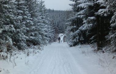 Pistes de ski de la Croix-Scaille-Ski de fond bis Provinz Luxemburg