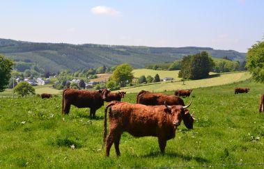 Ennal-Ville bis Provinz Luxemburg