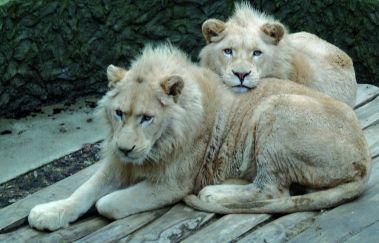 Der Tierpark von Bouillon-Parcs-animaliers bis Provinz Luxemburg