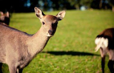 Forestia Tierpark-Parcs-animaliers bis Provinz Lüttich