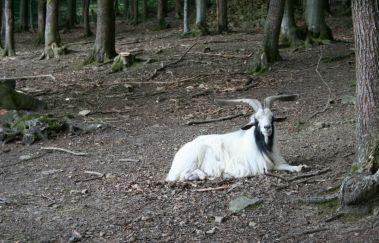 Wildpark von La Roche-en-Ardenne-Parcs-animaliers bis La Roche en Ardenne - Province du Luxembourg